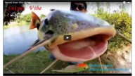 Spanyid Sniper vibe - Fishing